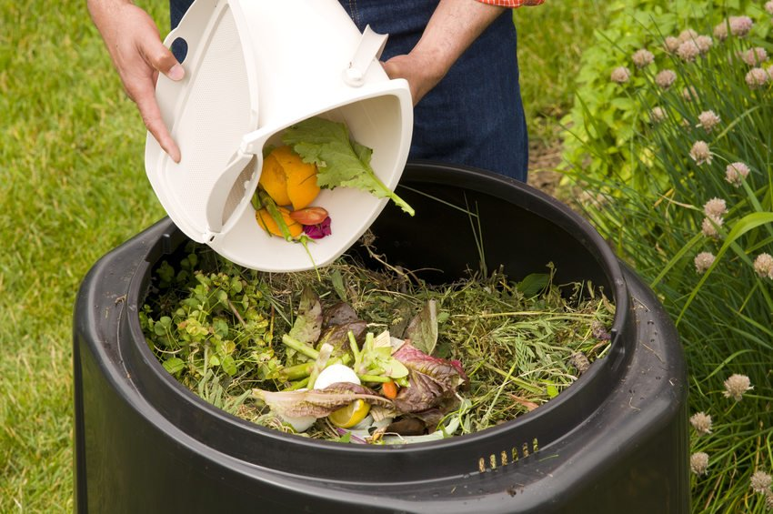 Organic Waste Definition and types